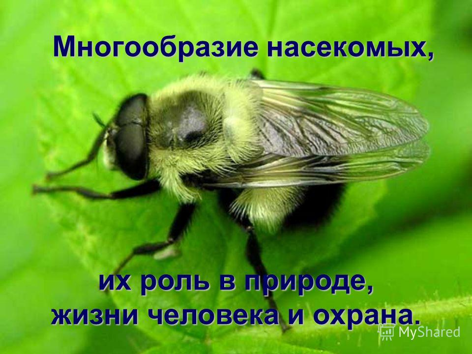 Многообразие насекомых, Многообразие насекомых, их роль в природе, жизни человека и охрана.