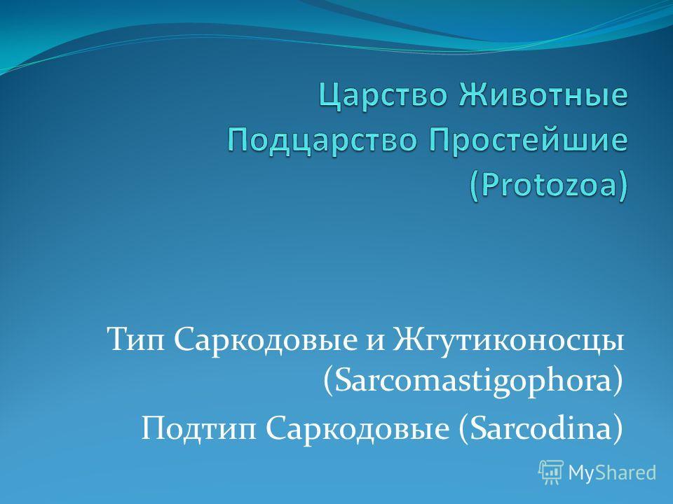 Тип Саркодовые и Жгутиконосцы (Sarcomastigophora) Подтип Саркодовые (Sarcodina)