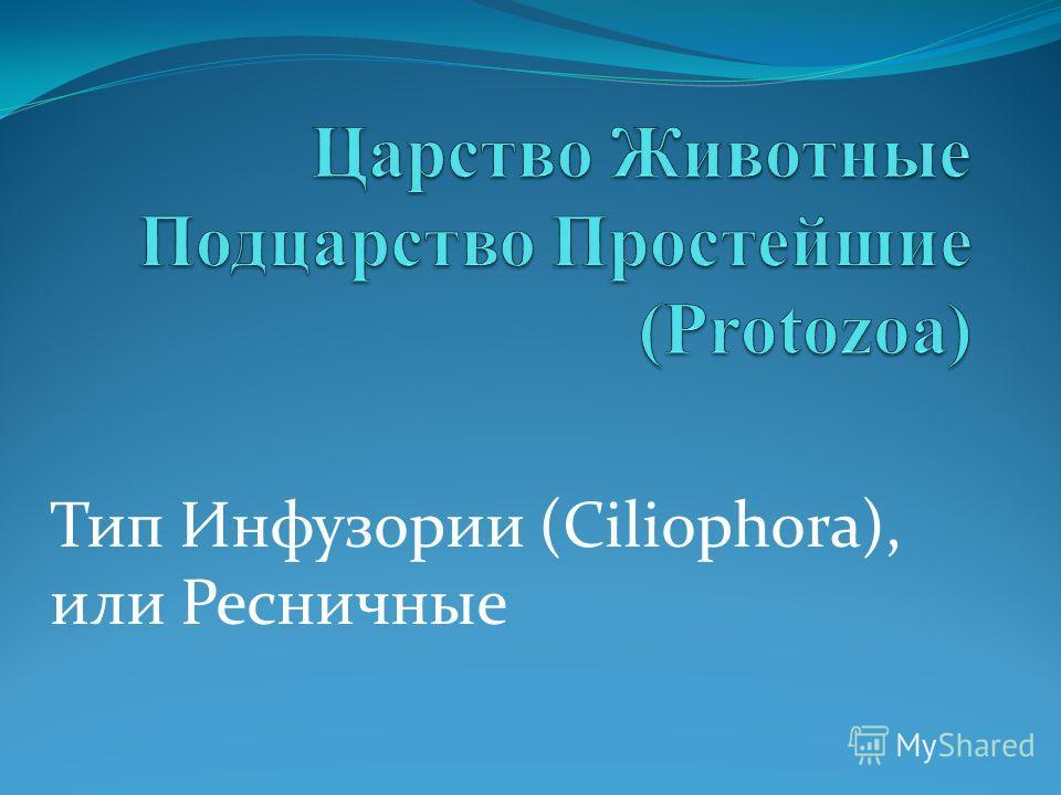 Тип Инфузории (Ciliophora), или Ресничные