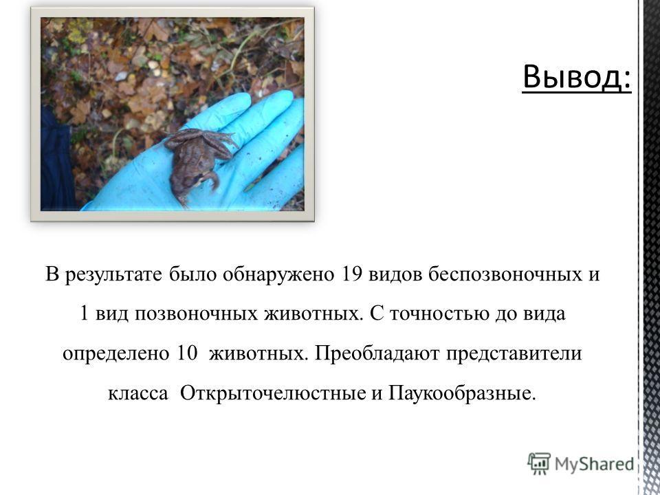 В результате было обнаружено 19 видов беспозвоночных и 1 вид позвоночных животных. С точностью до вида определено 10 животных. Преобладают представители класса Открыточелюстные и Паукообразные.