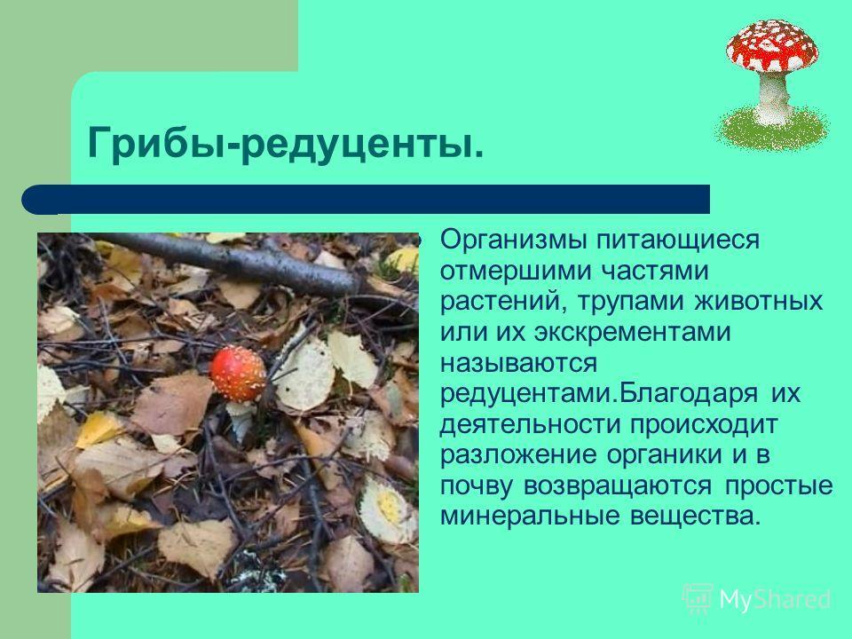 Способы питания грибов: Гетеротроф ы Симбионты ПаразитыХищники Сапрофиты Грибы поглощают питательные вещества, всасывая их всей поверхностью тела.