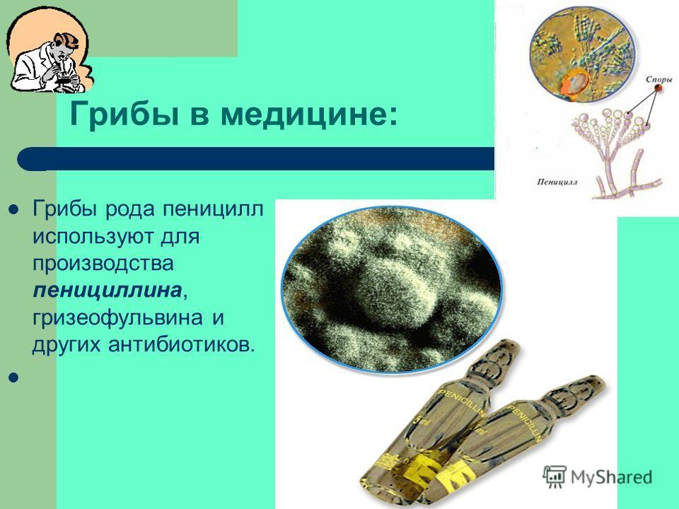 Плесневые грибы: ПЕНИЦИЛЛ - род Грибовых в, относим классу сумчатых либо (ввиду отсутствия полового размножения) к классу несовершенных. Ок. 250 видов, в почве, в виде плесеней на пищевых продуктах (вызывают их порчу). Образуют антибиотики (напр., пе