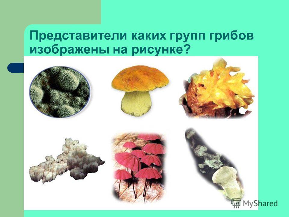 Заполните таблицу «Сравнительная характеристика грибов и растений». Черты сходства Черты отличия