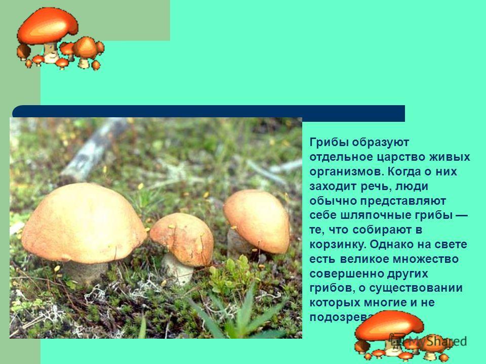 Грибы – это отдельное царство организмов, насчитывающее свыше 100 000 видов, различных по образу жизни, строению и внешнему виду. Считается, что всего на Земле полтора миллиона видов грибов. В настоящее время они выделены в отдельное царство эукариот