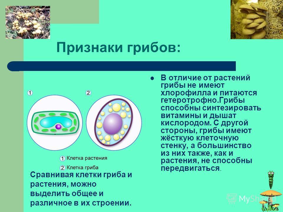 Многообразие грибов Наука, изучающая грибы, называется микологией. Грибов в наших лесах растёт великое множество. Они всюду – под нависшими лапами елей, на пнях, на местах старых кострищ, среди мха и травы, на стволах и ветвях деревьев. К грибам отно