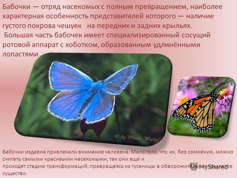 Бабочки отряд насекомых с полным превращением, наиболее характерная особенность представителей которого наличие густого покрова чешуек на передних и задних крыльях. Большая часть бабочек имеет специализированный сосущий ротовой аппарат с хоботком, об