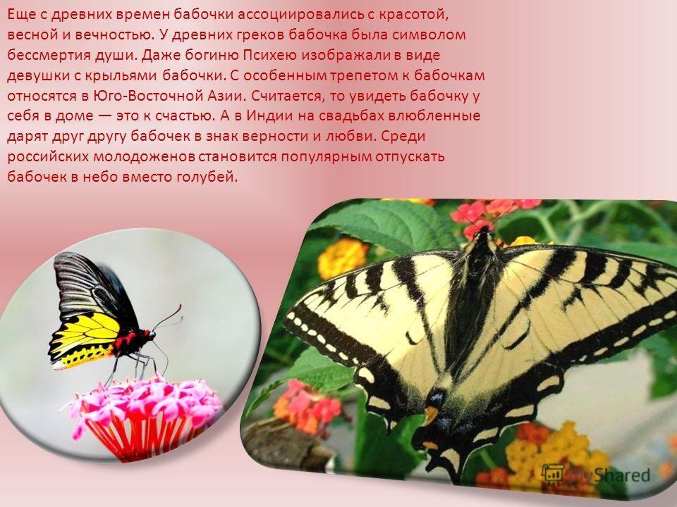 Еще с древних времен бабочки ассоциировались с красотой, весной и вечностью. У древних греков бабочка была символом бессмертия души. Даже богиню Психею изображали в виде девушки с крыльями бабочки. С особенным трепетом к бабочкам относятся в Юго-Вост