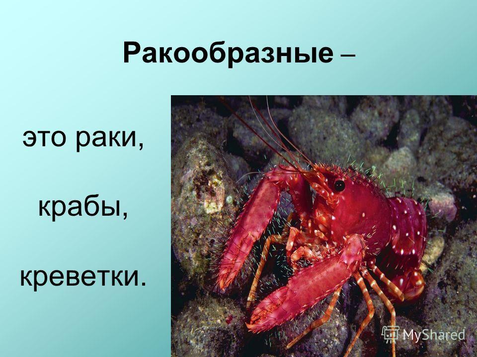 Ракообразные – это раки, крабы, креветки.