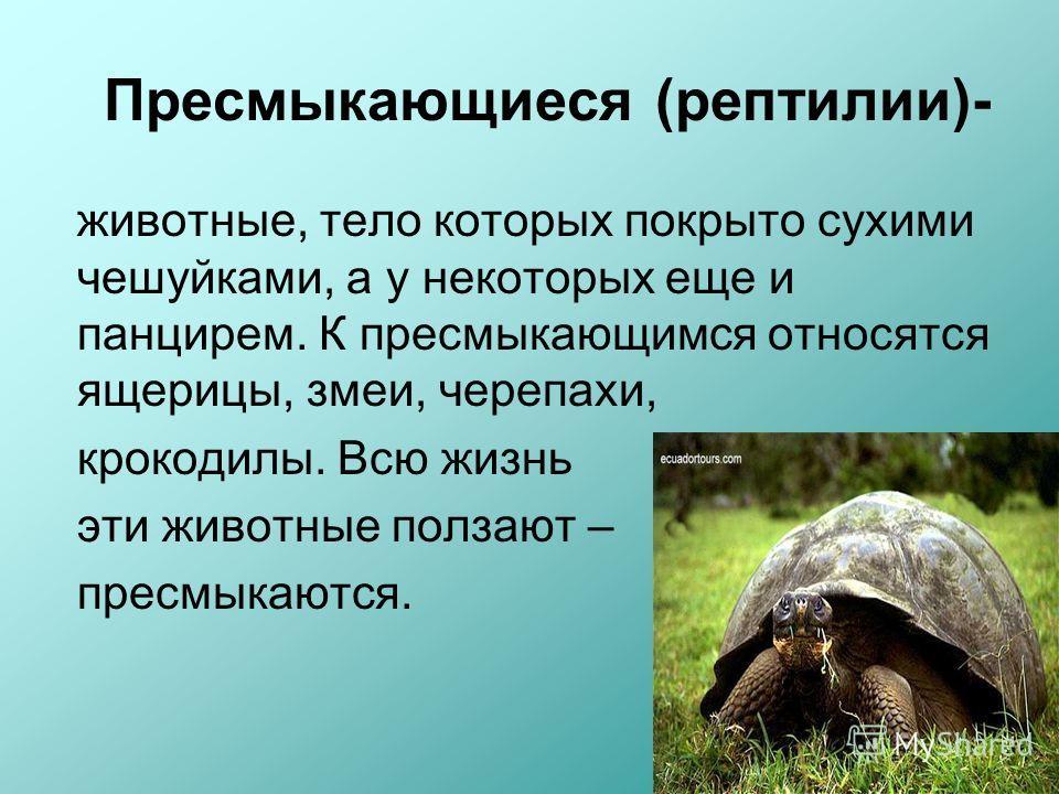 Пресмыкающиеся (рептилии)- животные, тело которых покрыто сухими чешуйками, а у некоторых еще и панцирем. К пресмыкающимся относятся ящерицы, змеи, черепахи, крокодилы. Всю жизнь эти животные ползают – пресмыкаются.