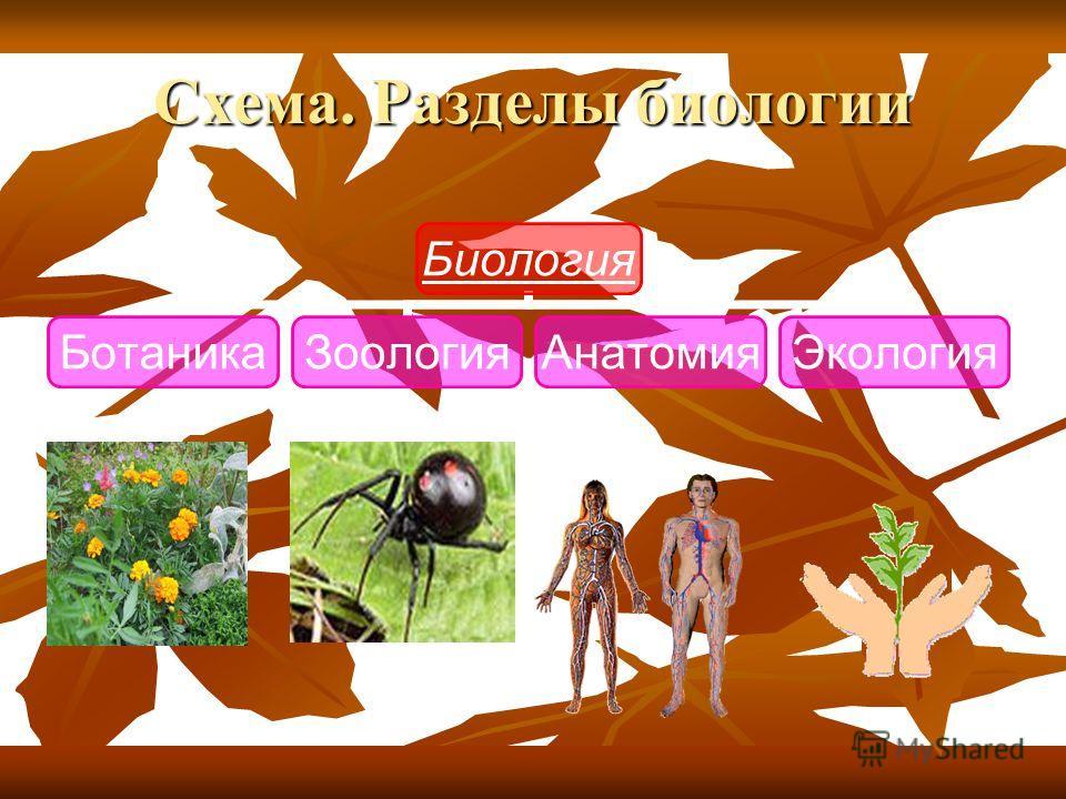 Схема. Разделы биологии
