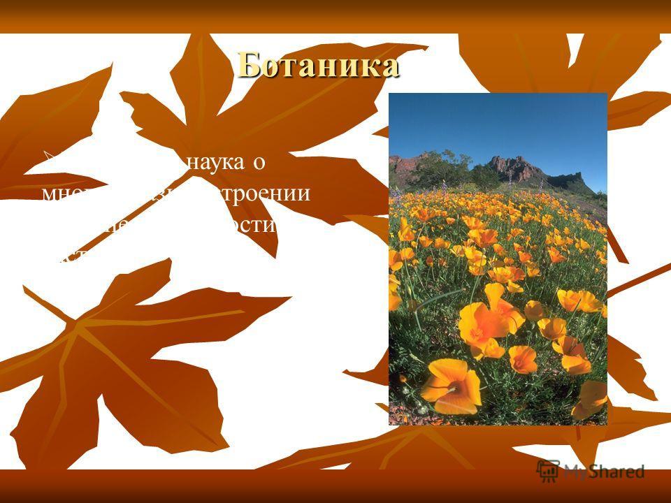 Ботаника Ботаника Ботаника - наука о многообразии, строении и жизнедеятельности растений.