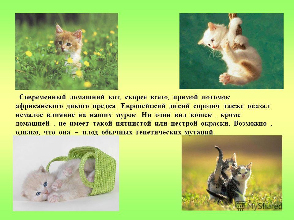 Многие ученые считают, что совместная жизнь человека и кошки началась около 3000 года до н. э. И произошло это скорее всего в Египте. К этому времени сельское хозяйство развилось настолько,что крысы и мыши стали серьезной проблемой,и это заставило че