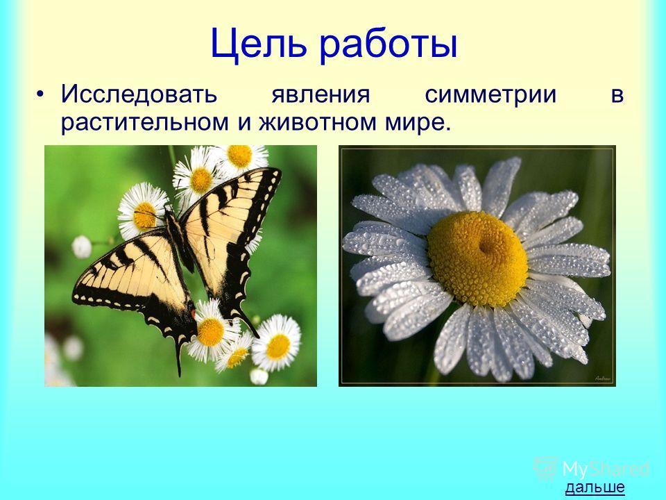 Цель работы Исследовать явления симметрии в растительном и животном мире. дальше