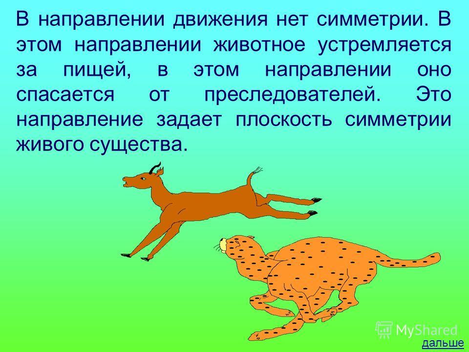 В направлении движения нет симметрии. В этом направлении животное устремляется за пищей, в этом направлении оно спасается от преследователей. Это направление задает плоскость симметрии живого существа. дальше