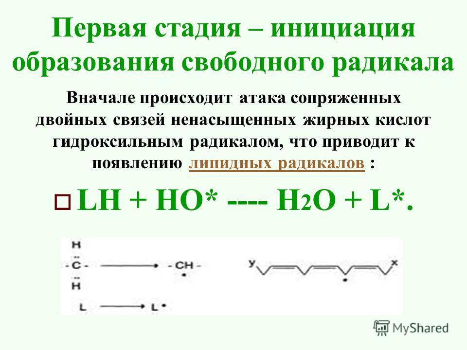 Первая стадия – инициация образования свободного радикала Вначале происходит атака сопряженных двойных связей ненасыщенных жирных кислот гидроксильным радикалом, что приводит к появлению липидных радикалов :липидных радикалов LH + НО* ---- H 2 O + L*