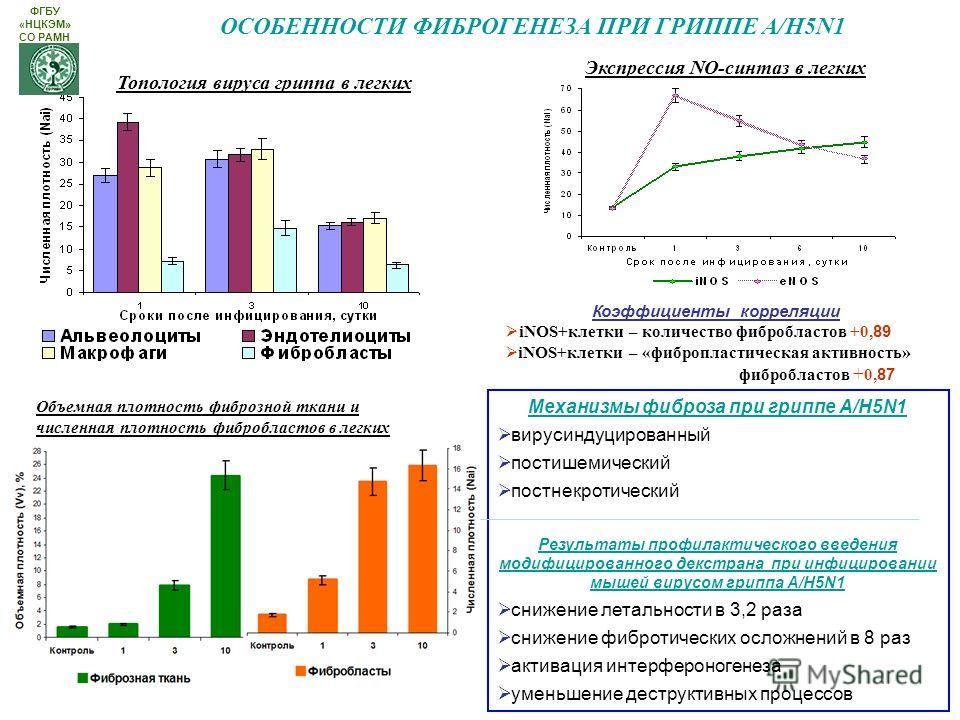 ОСОБЕННОСТИ ФИБРОГЕНЕЗА ПРИ ГРИППЕ А/H5N1 Экспрессия NO-синтез в легких Топология вируса гриппа в легких Коэффициенты корреляции iNOS+клетки – количество фибробластов +0, 89 iNOS+клетки – «фибропластическая активность» фибробластов + 0, 87 Механизмы