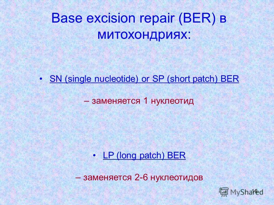 16 Base excision repair (BER) в митохондриях: SN (single nucleotide) or SP (short patch) BER – заменяется 1 нуклеотид LP (long patch) BER – заменяется 2-6 нуклеотидов