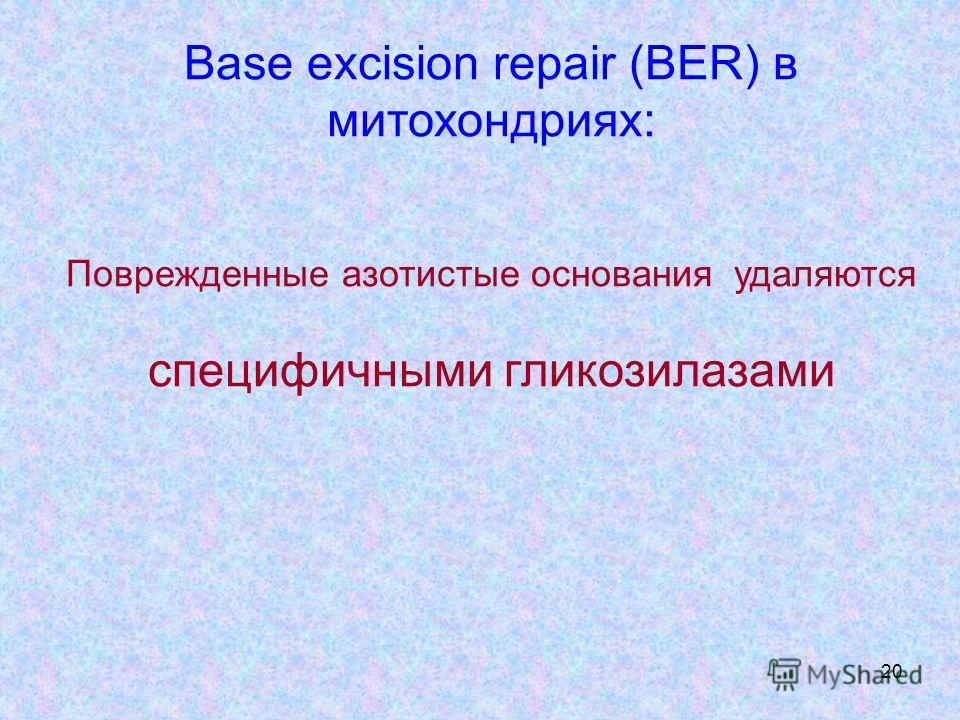 20 Base excision repair (BER) в митохондриях: Поврежденные азотистые основания удаляются специфичными гликозилазами