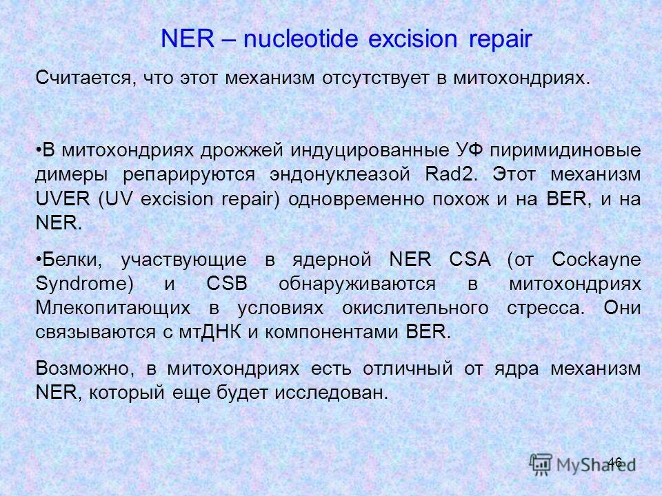 46 NER – nucleotide excision repair Считается, что этот механизм отсутствует в митохондриях. В митохондриях дрожжей индуцированные УФ пиримидиновые димеры препарируются эндонуклеазой Rad2. Этот механизм UVER (UV excision repair) одновременно похож и