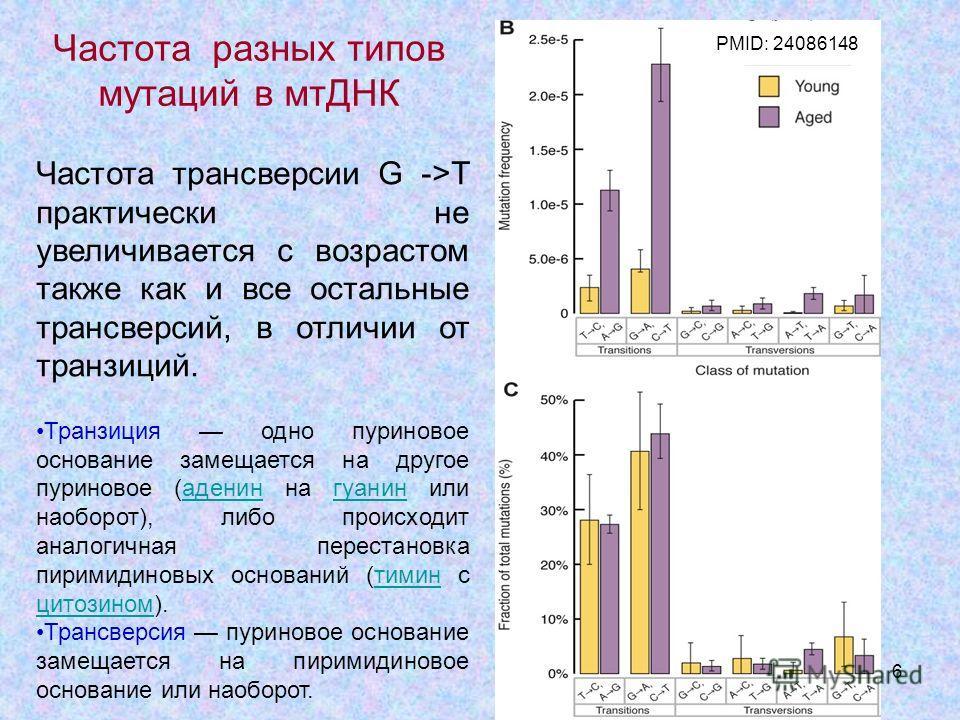 6 Частота трансверсии G ->T практически не увеличивается с возрастом также как и все остальные трансверсий, в отличии от транзиций. Транзиция одно пуриновое основание замещается на другое пуриновое (аденин на гуанин или наоборот), либо происходит ана