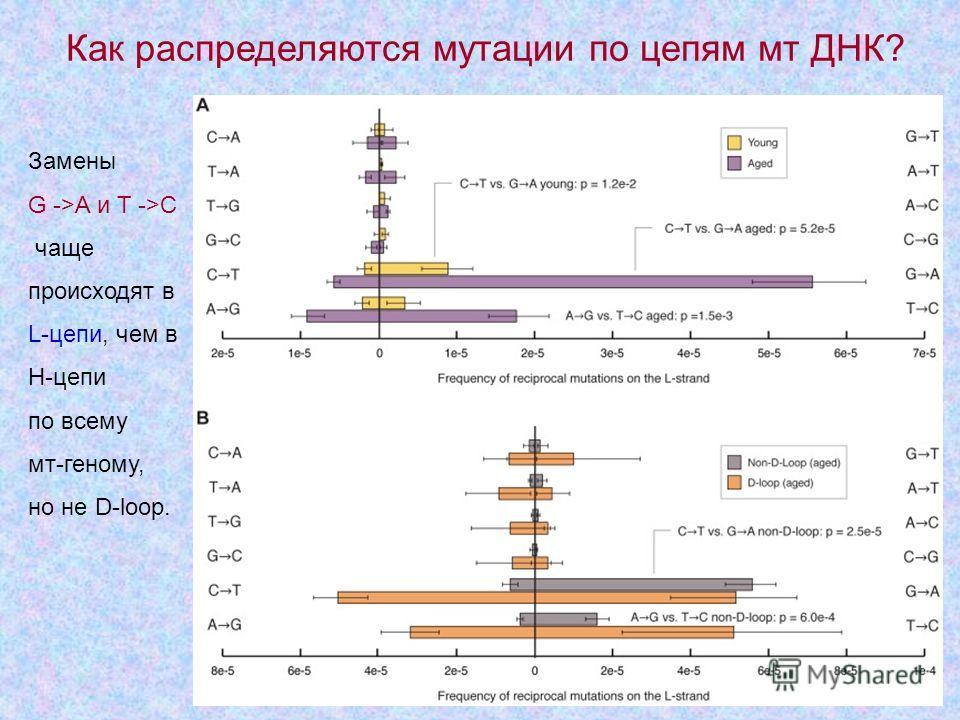 9 Замены G ->A и Т ->С чаще происходят в L-цепи, чем в Н-цепи по всему мт-геному, но не D-loop. Как распределяются мутации по цепям мт ДНК?