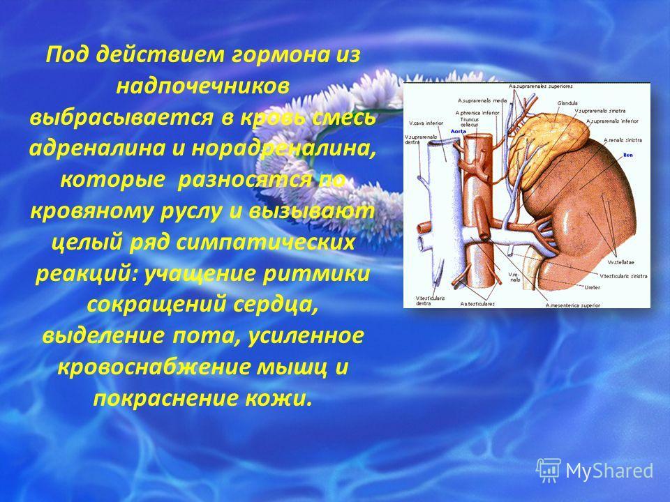 Под действием гормона из надпочечников выбрасывается в кровь смесь адреналина и норадреналина, которые разносятся по кровяному руслу и вызывают целый ряд симпатических реакций: учащение ритмики сокращений сердца, выделение пота, усиленное кровоснабже