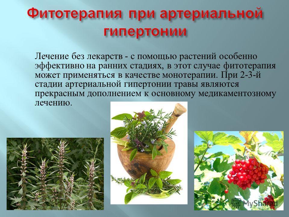 Лечение без лекарств - с помощью растений особенно эффективно на ранних стадиях, в этот случае фитотерапия может применяться в качестве монотерапии. При 2-3- й стадии артериальной гипертонии травы являются прекрасным дополнением к основному медикамен
