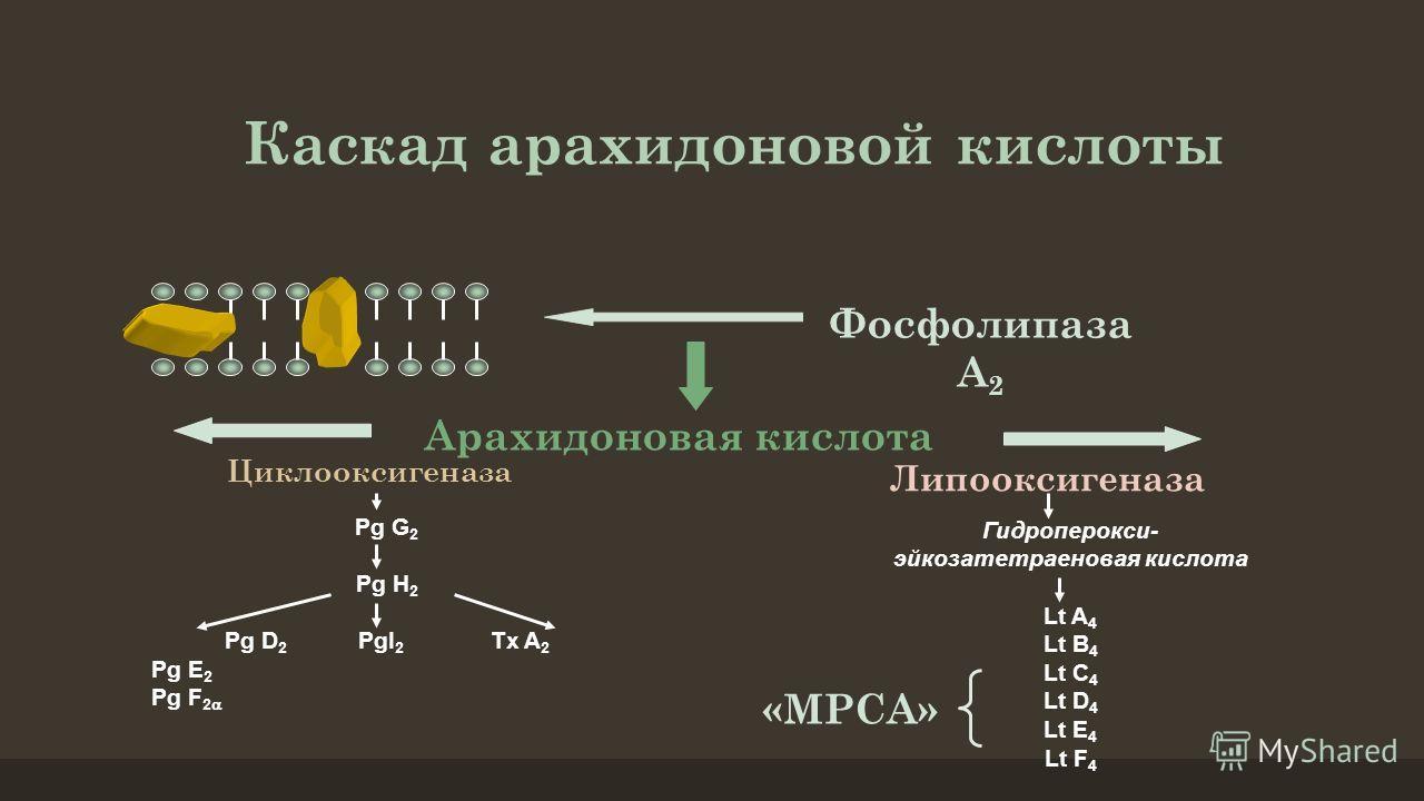 Гидроперокси- эйкозатетраеновая кислота Lt A 4 Lt B 4 Lt C 4 Lt D 4 Lt E 4 Lt F 4 Каскад арахидоновой кислоты Фосфолипаза А 2 Арахидоновая кислота Циклооксигеназа Липооксигеназа Pg G 2 Pg H 2 Pg D 2 PgI 2 Tx A 2 Pg E 2 Pg F 2 «МРСА»