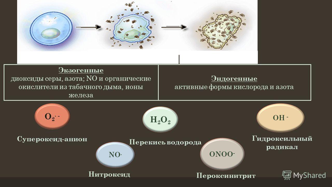 Нормальная клетка Воздействие свободных радикалов Оксидативный стресс Экзогенные диоксиды серы, азота; NO и органические окислители из табачного дыма, ионы железа Эндогенные активные формы кислорода и азота O 2. - Супероксид-анион NO. Нитроксид Н2О2Н