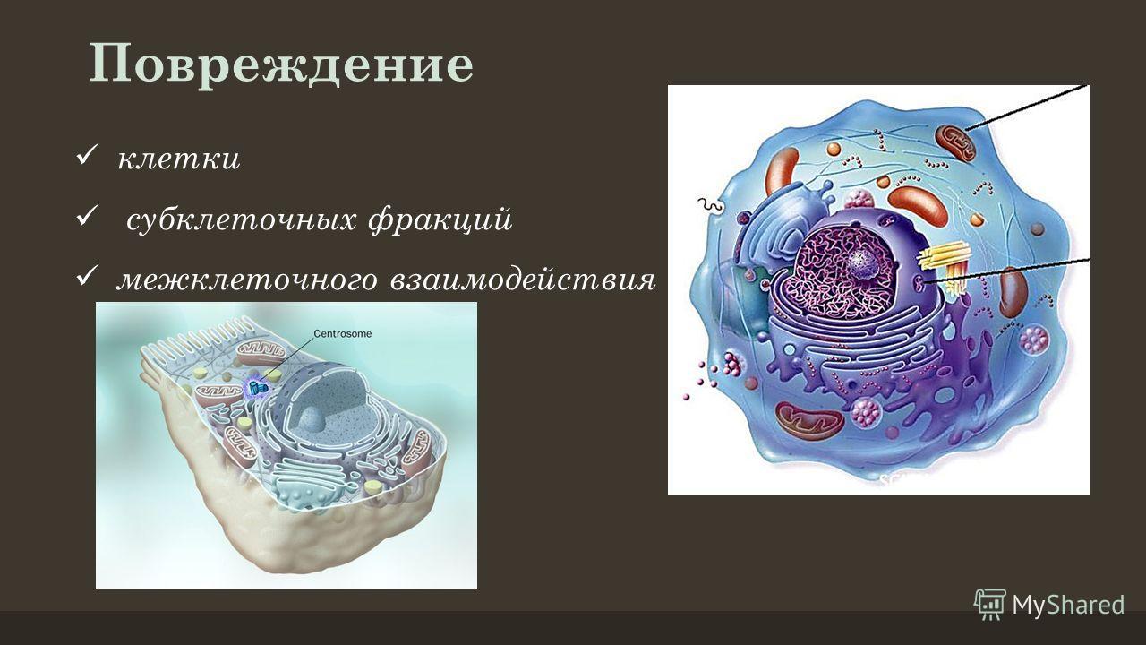 клетки субклеточных фракций межклеточного взаимодействия Повреждение