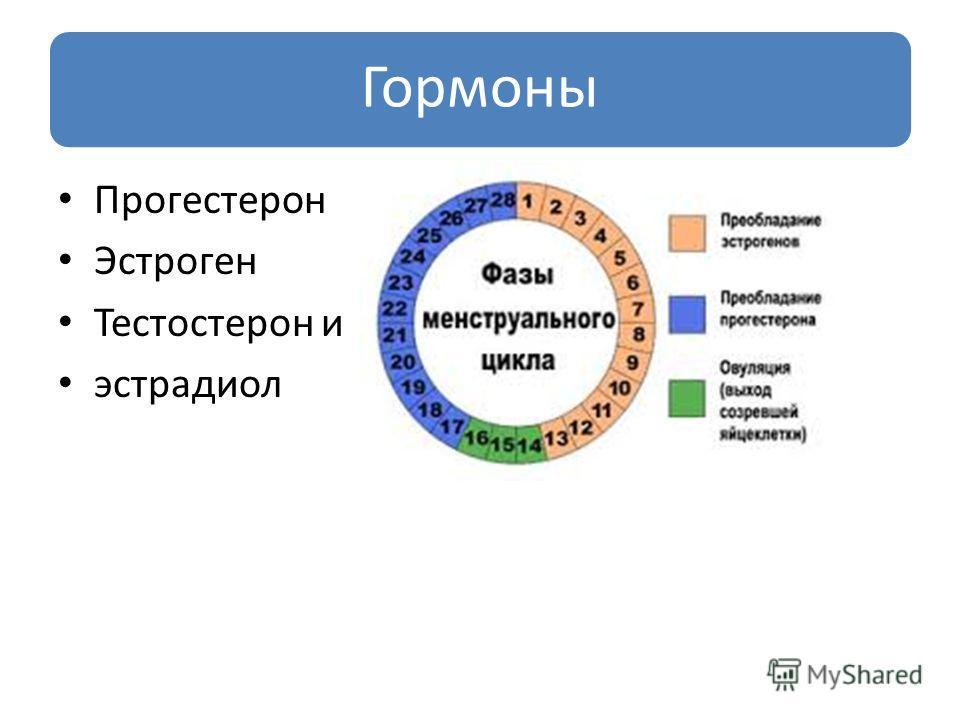 Гормоны Прогестерон Эстроген Тестостерон и эстрадиол