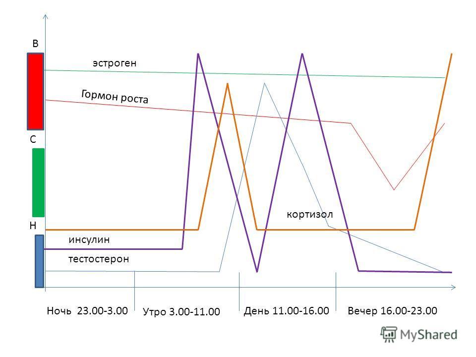 Ночь 23.00-3.00 Утро 3.00-11.00 День 11.00-16.00 Вечер 16.00-23.00 Н С В Гормон роста тестостерон эстроген инсулин кортизол