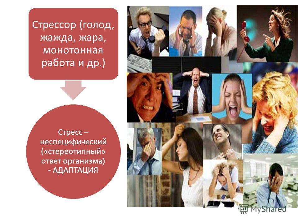Стресс – неспецифический («стереотипный» ответ организма) - АДАПТАЦИЯ Стрессор (голод, жажда, жара, монотонная работа и др.)