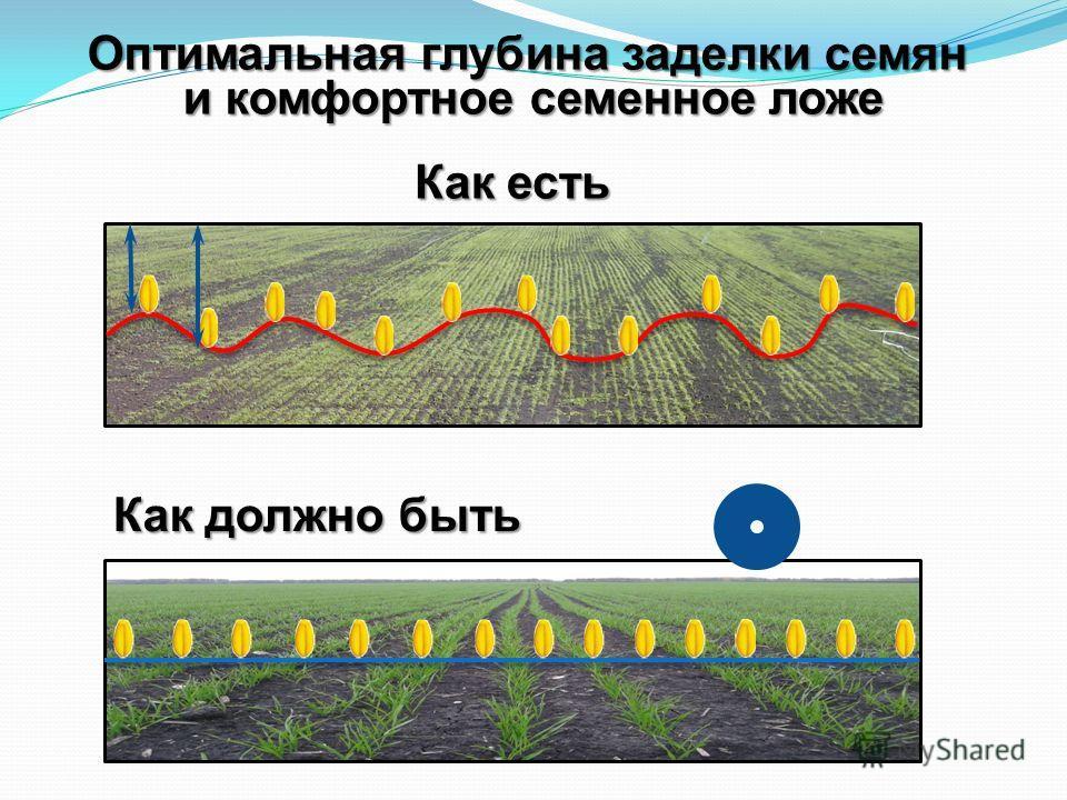 Оптимальная глубина заделки семян и комфортное семенное ложе Как есть Как должно быть