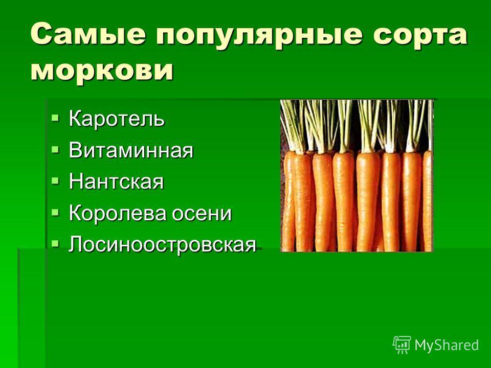 Самые популярные сорта моркови Каротель Каротель Витаминная Витаминная Нантская Нантская Королева осени Королева осени Лосиноостровская Лосиноостровская