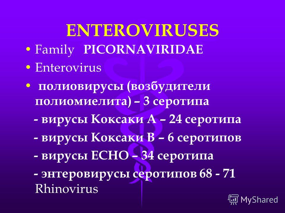 ENTEROVIRUSES Family PICORNAVIRIDAE Enterovirus полиовирусы (возбудители полиомиелита) – 3 серотипа - вирусы Коксаки А – 24 серотипа - вирусы Коксаки В – 6 серотипов - вирусы ЕСНО – 34 серотипа - энтеровирусы серотипов 68 - 71 Rhinovirus