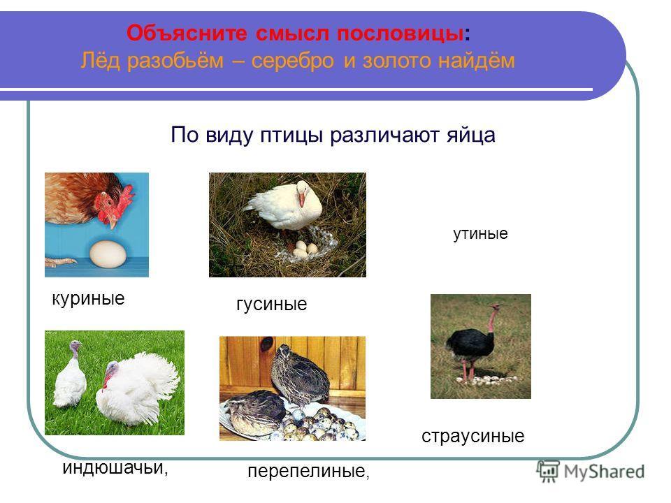 Объясните смысл пословицы: Лёд разобьём – серебро и золото найдём По виду птицы различают яйца куриные гусиные индюшачьи, перепелиные, страусиные утиные