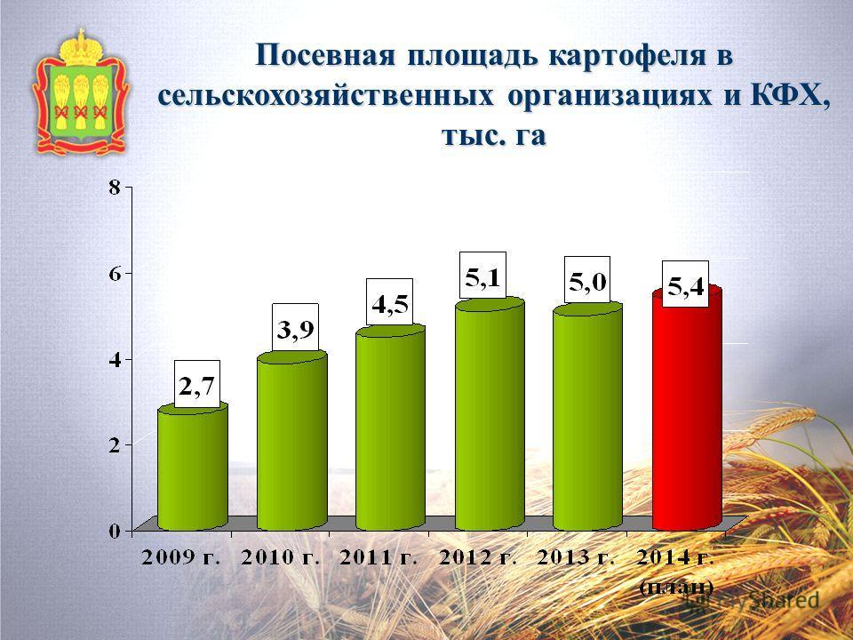 Посевная площадь картофеля в сельскохозяйственных организациях и КФХ, тыс. га