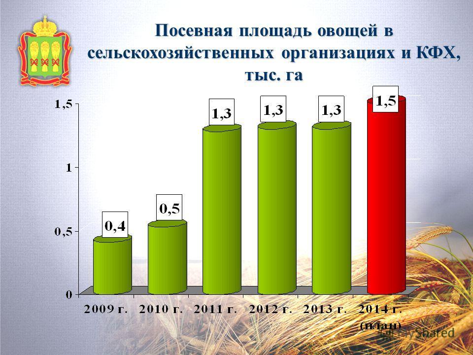 Посевная площадь овощей в сельскохозяйственных организациях и КФХ, тыс. га