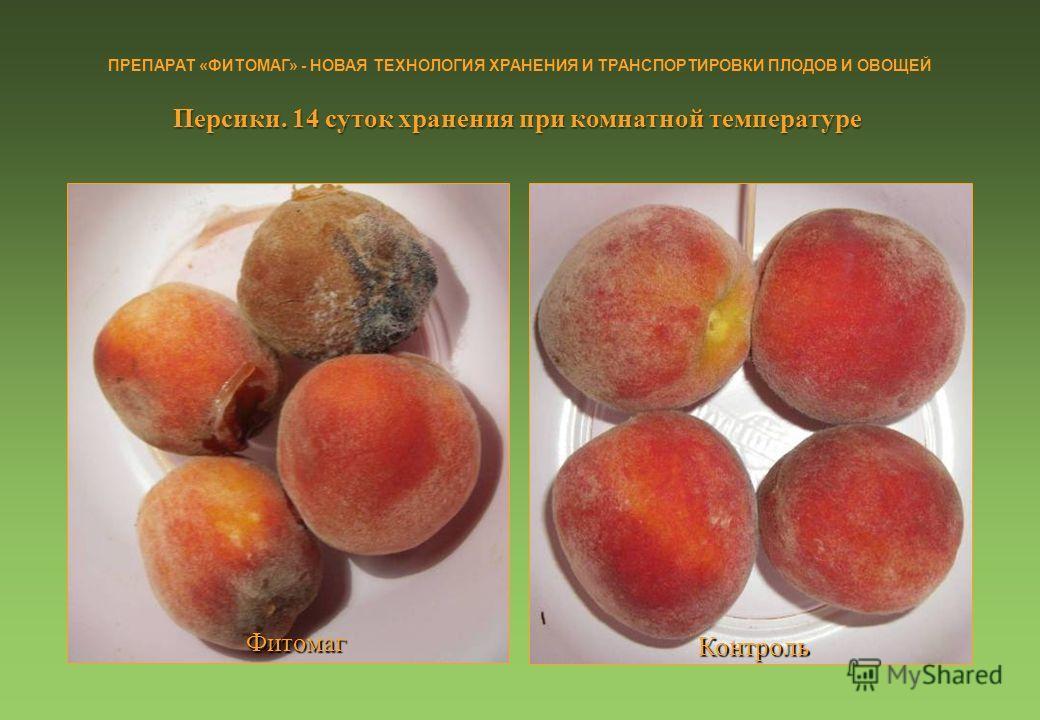 Персики. 14 суток хранения при комнатной температуре Фитомаг Контроль