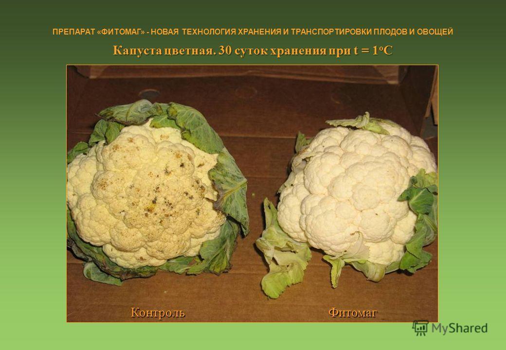 Способы хранения капусты