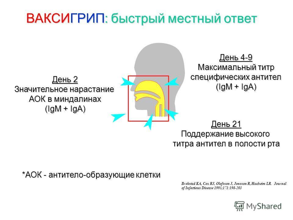 ВАКСИГРИП: быстрый местный ответ День 2 Значительное нарастание АОК в миндалинах (IgM + IgA) День 4-9 Максимальный титр специфических антител (IgM + IgA) День 21 Поддержание высокого титра антител в полости рта Brokstad KA, Cox RJ, Olofsson J, Jonsso