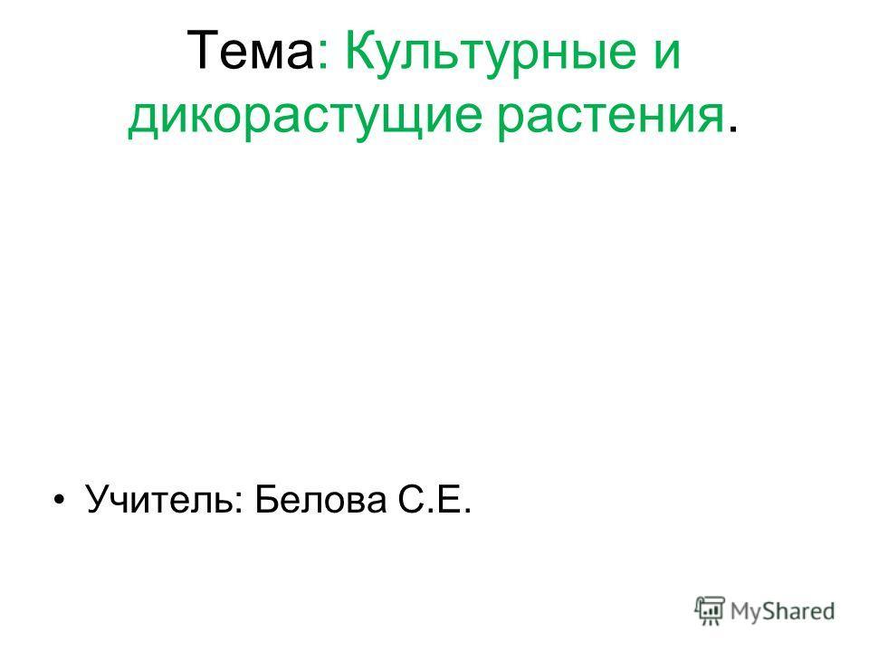 Тема: Культурные и дикорастущие растения. Учитель: Белова С.Е.