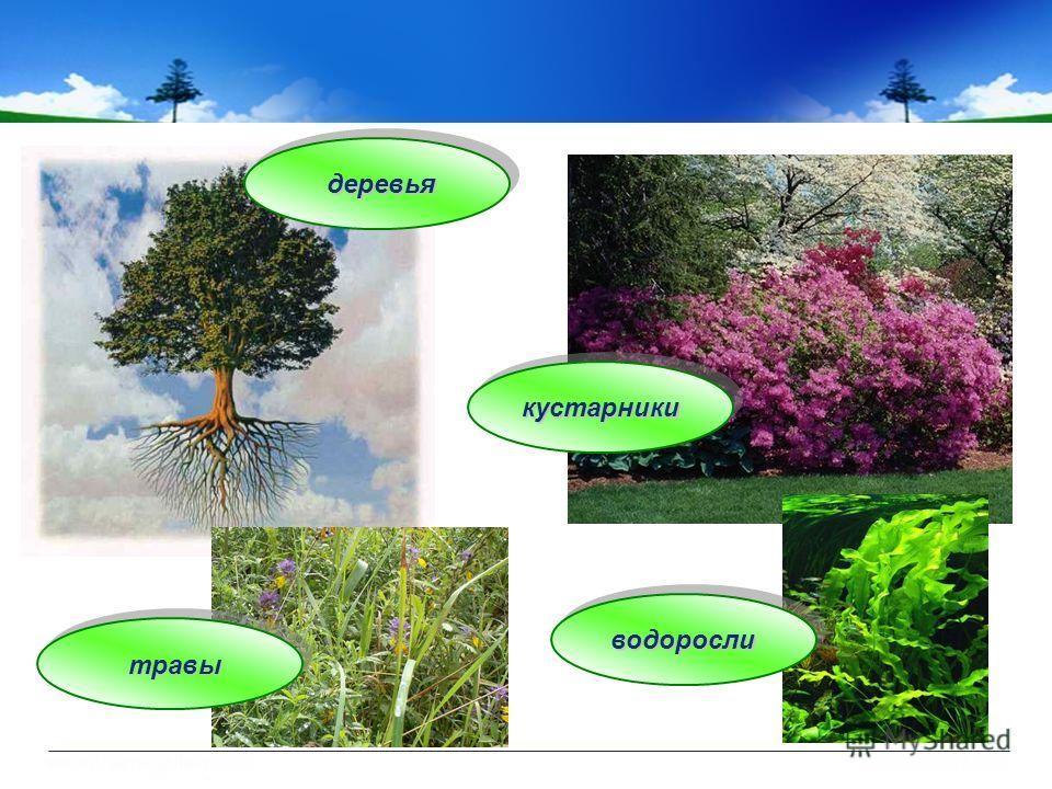 деревья кустарники травы водоросли