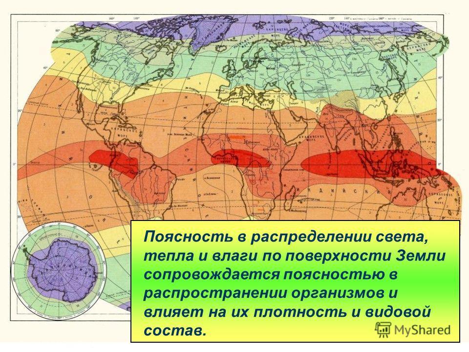 Поясность в распределении света, тепла и влаги по поверхности Земли сопровождается поясностью в распространении организмов и влияет на их плотность и видовой состав.