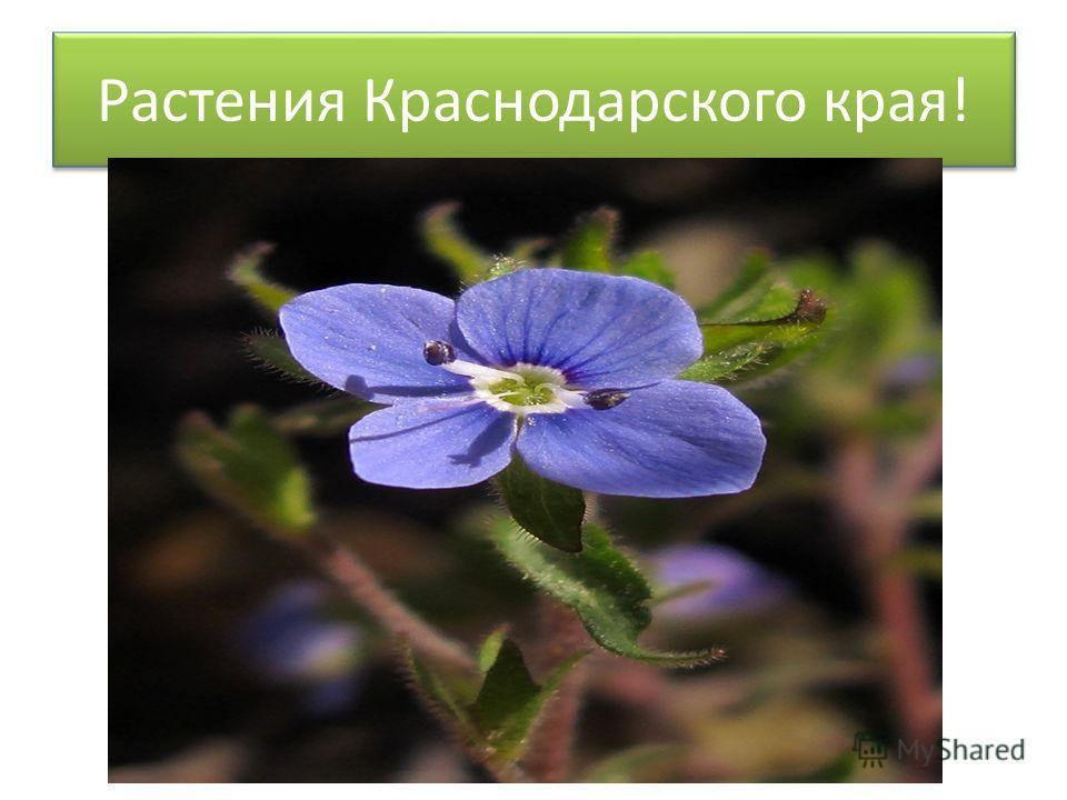 Растения Краснодарского края!