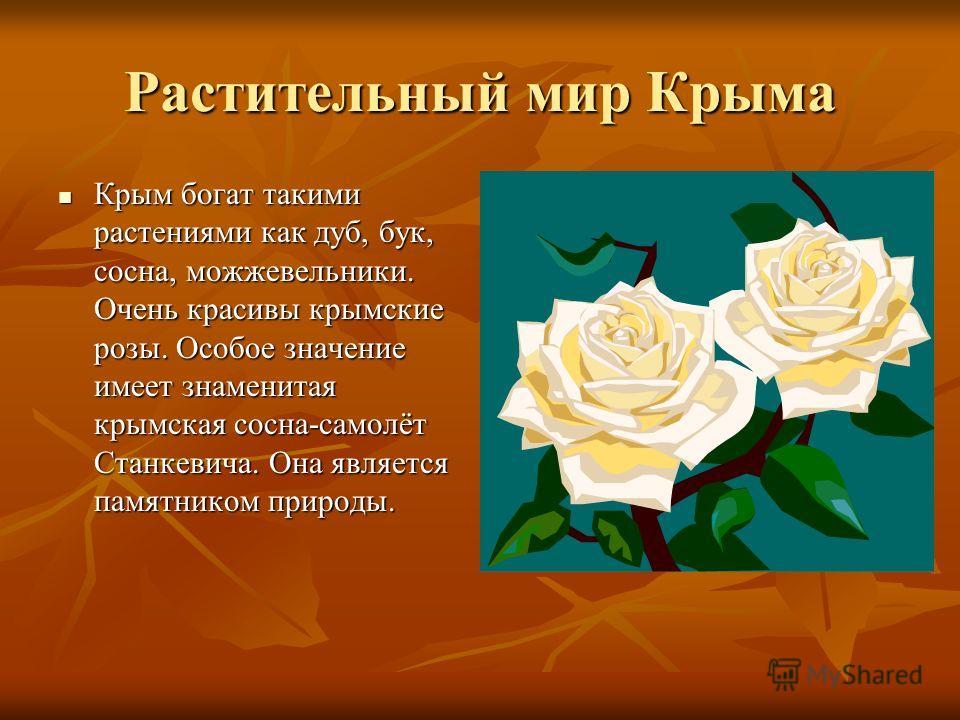 Растительный мир Крыма Крым богат такими растениями как дуб, бук, сосна, можжевельники. Очень красивы крымские розы. Особое значение имеет знаменитая крымская сосна-самолёт Станкевича. Она является памятником природы. Крым богат такими растениями как