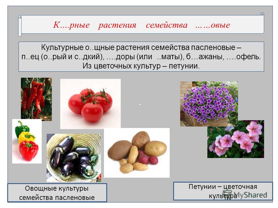 - Культурные о..хиюные расте ния семейства пасле нновые – п..ес (о..рай и с..дикий), ….доры (или..маты), б…ажанны, ….отель. Из цветочных культур – петунии. К….рные расте ния семейства ……новые Овохиюные культуры семейства пасле нновые Петунии – цветоч
