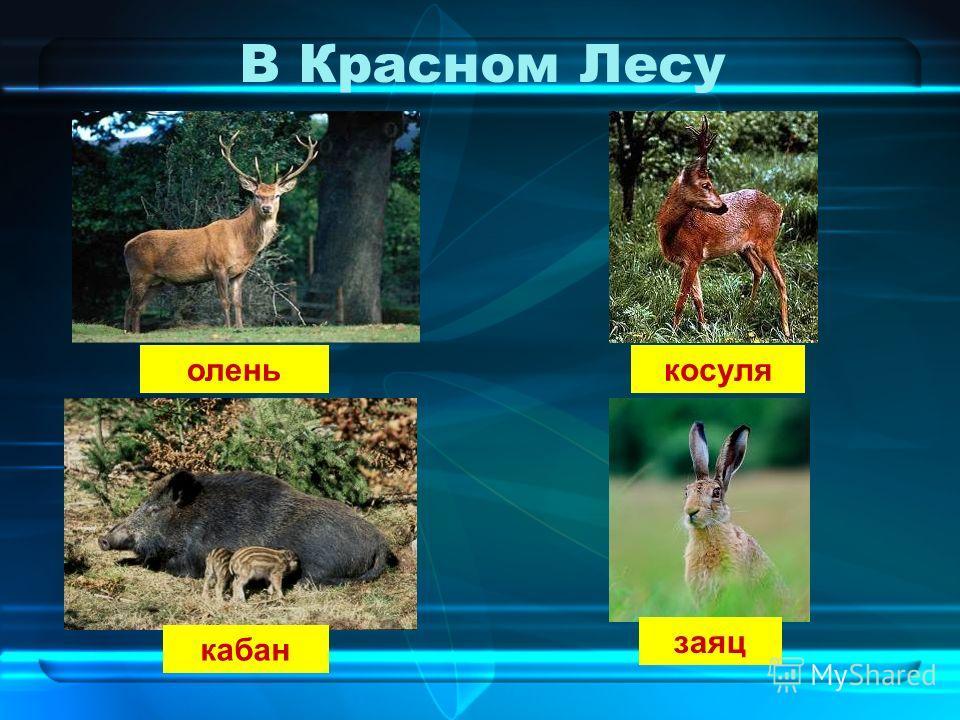 В Красном Лесу олень косуля кабан заяц