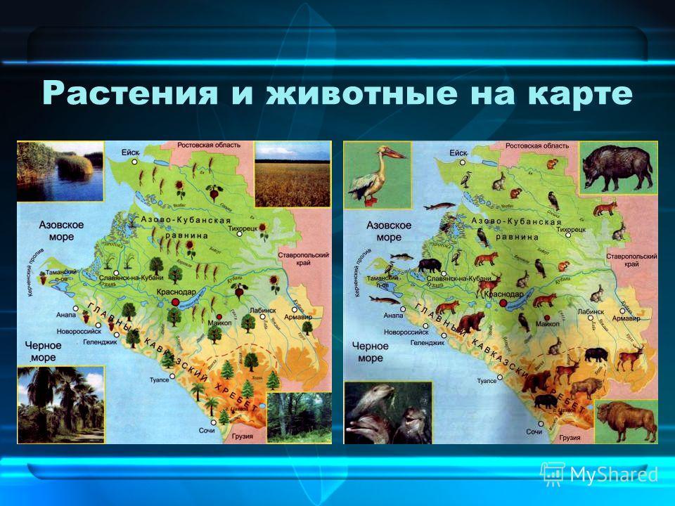 Растения и животные на карте